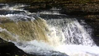 Salmon leaping at Knight Stainforth Caravan Site River Ribble