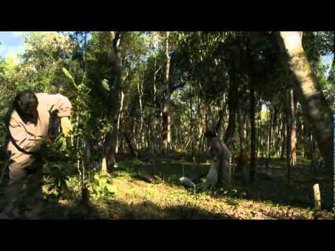 Guayaki Yerba Mate - De los bosques sudamericanos al mundo
