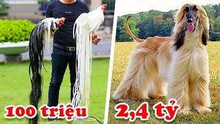 7 The Most Expensive Pet In Vietnam Only The Rich Family Can Raise