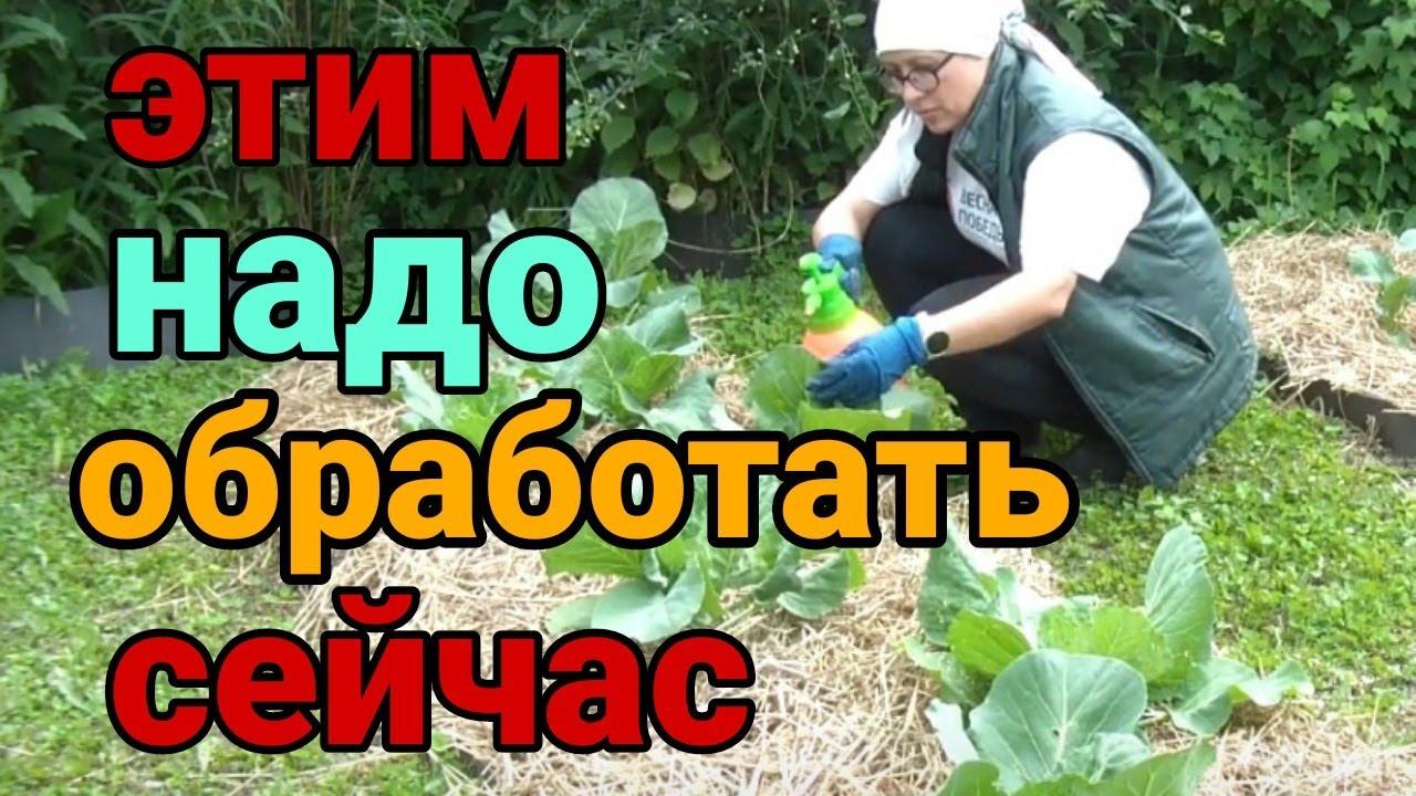 Как подготовить сад к осени. Осенние работы в саду и на огороде #обработатьосенью