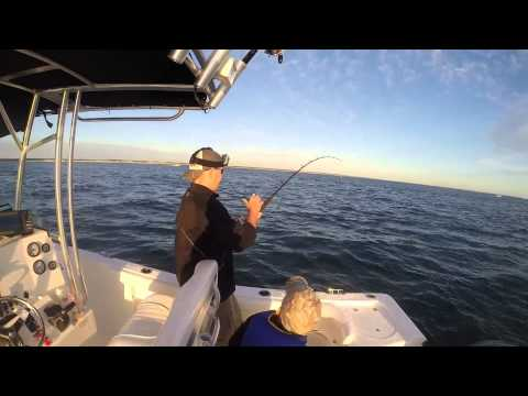 Cape Cod  Barnstable Harbor Striper Fishing June 2014