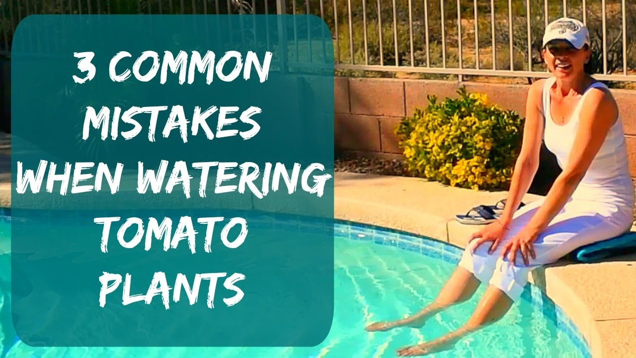 How much to water tomatoes in containers - Watering Tomato Plants Signs Of Overwatering How To Water Tomatoes Container Plants In Arizona