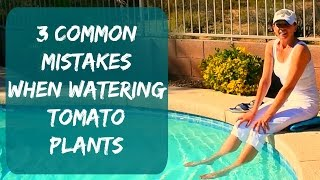 Watering Tomato Plants & Signs Of Overwatering - How To Water Tomatoes & Container Plants in Arizona