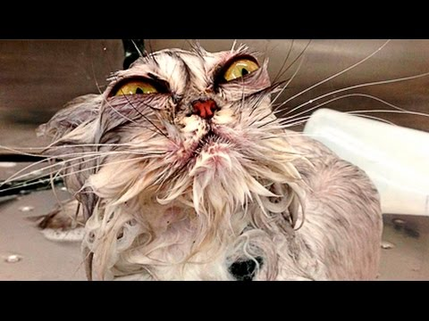 Cats just don't want to bathe | Funny cat bathing compilation | funnycat12