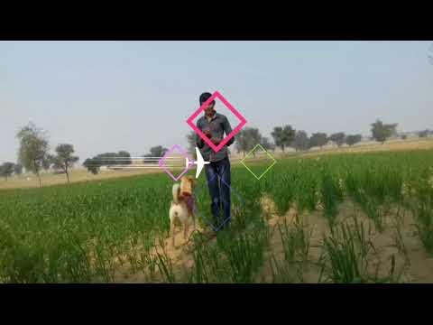 Dog Ke Bare Mein Jaane Video Mein