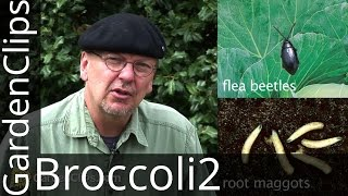 How to Grow Broccoli, Cabbage, and Other Cole Crops - Part 2 Pest Management