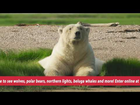 Manitoba Wild Contest Video