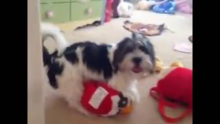 Repeat youtube video Funny Dog Vine Compilation - Dogs will hump anything