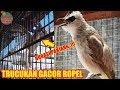 Suara Trucukan Gacor Ropel Panjang Untuk Pancingan  Ampuh  Mp3 - Mp4 Download
