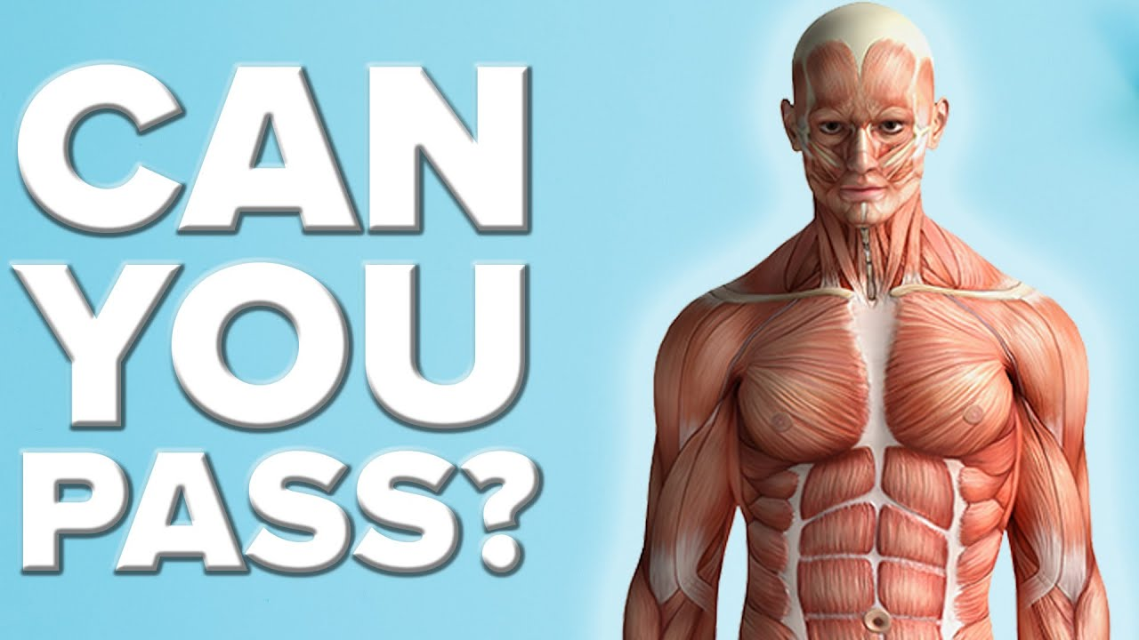 Can You Pass A Basic Anatomy Test? - YouTube