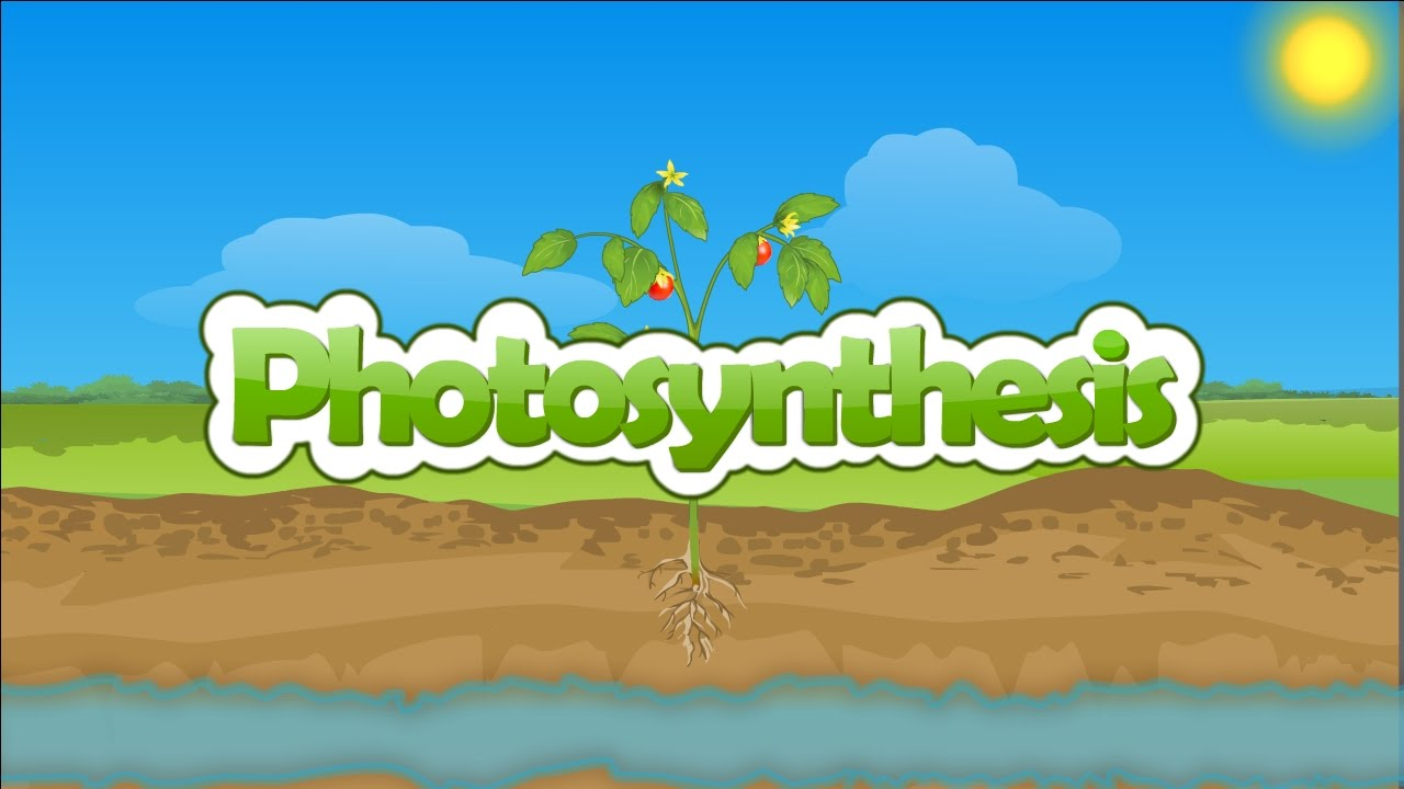 plants photosythesis Kids learn about the science of photosynthesis how plants gather energy from the sun by turning sunlight, water, and carbon dioxide into glucose and oxygen using.