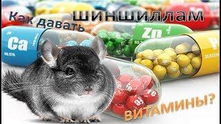 Как давать ВИТАМИНЫ шиншиллам? Как я витаминизирую своих шиншилл :3