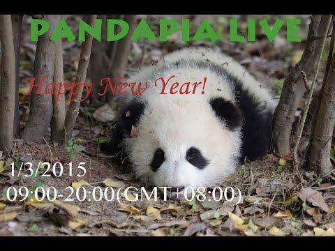 pandapia live 20150103 熊貓寶寶賀新年