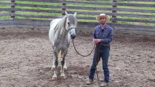 How to prepare your horse for an Introduction to Liberty Clinic
