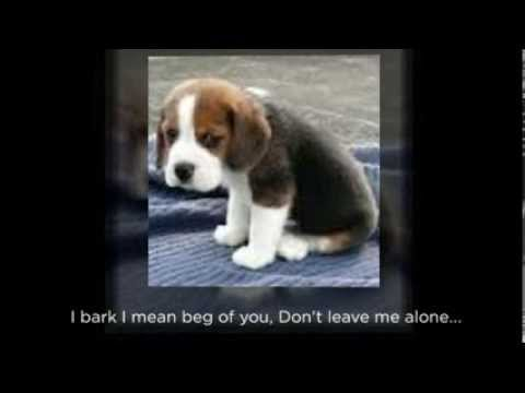 Puppy Separation Anxiety How To Deal With It Through Positive