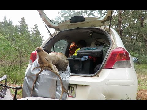 Yaris Times In The Pines. A Fallow Mission
