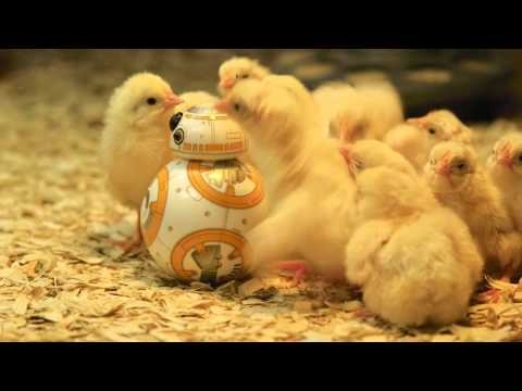 BB-8 Visits the Museum