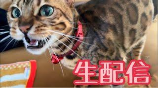 【ランチ生配信2/4】パパさんが猫部屋から始める生配信
