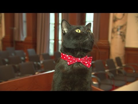 Gladstone the cat becomes 'chief mouser' for the Treasury