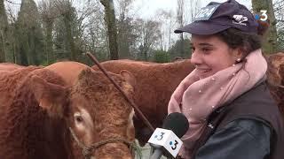 Elevage bovin : concours général 2020 de la Limousine à Lubersac (19)