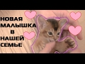 Новый маленький котенок Ариела в семье | тигренок - блогер | розовая комната для малышки