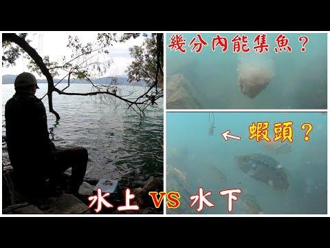 日月潭水上水下同步攝影,原來魚這樣吃餌!
