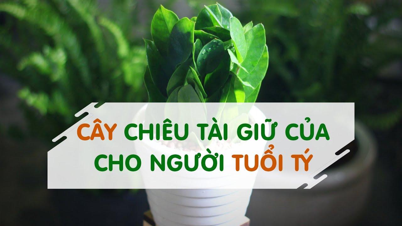 Cây phong thủy tuổi Tý, người tuổi Tý nên trồng cây gì hợp phong thủy để đón lộc trời cho?