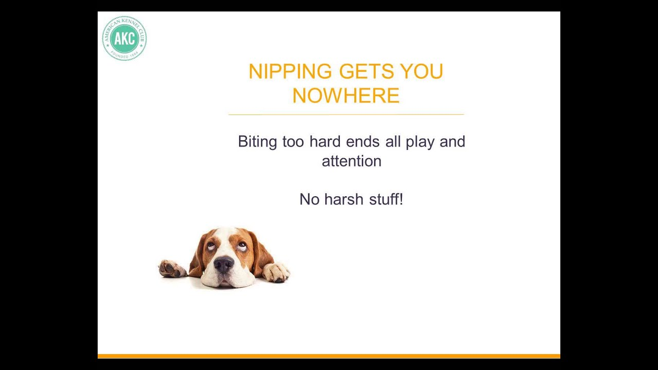 how to stop your puppy from jumping and nipping