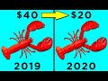 Lobsters are now much cheaper than you can imagine. Lets find out why lobsters are now so cheap! Suggest a topic here to be turned into a video: http://bit.ly/2kwqhuh Subscribe for more! ► https://goo.gl/pgcoq1 ◄ Stay updated ► https://goo.gl/JyGcTt https://goo.gl/5c8dzr ◄  For copyright queries or general inquiries please get in touch: hello@beamazed.com  Legal Stuff. Unless otherwise created by BeAmazed, licenses have been obtained for images/footage in the video from the following sources: https://pastebin.com/ZgusXNcR