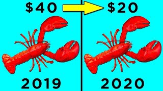 Why Lobsters are Now So Cheap