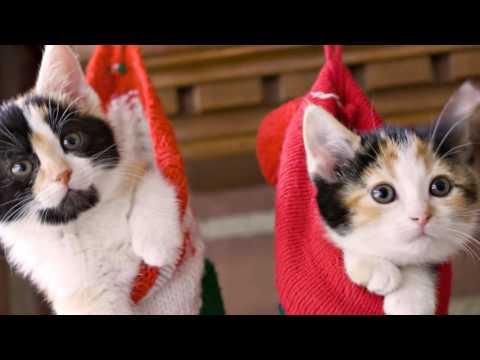 The Dancing Cat  - Henry mancini