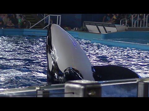 One Ocean (Full Show/Full HD) July 26 2015 4pm - SeaWorld San Antonio