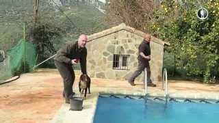 Планета собак. Испанская водяная собака