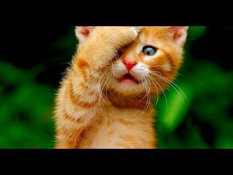 Смешные кошки и