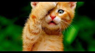 Смешные кошки и собаки Август 2019 Новые приколы с котами, смешные коты 2019 funny cats animals #95