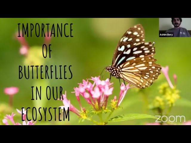 Webinar on Importance of Butterflies in our Ecosystem with Vivekanand School