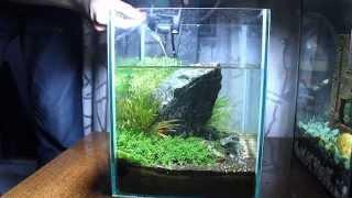 Уход за нано аквариумом(Care of a nano aquarium)Aquascape