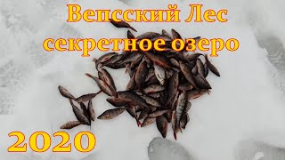 Рыбалка в Ленинградской области Вепсский лес Секретное озеро