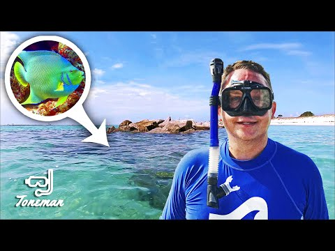 Snorkeling with Blue Angelfish and More! St Andrews State Park PCB!