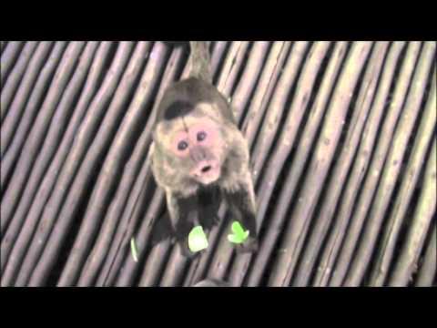 Africa Trip-Bush Babies Sanctuary