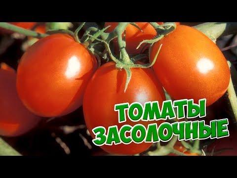 Обзор сортов томатов 🍅 Помидоры для открытого грунта 🍅 обзор семян для консервирования