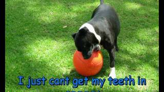 Staffie Ball Aussie Dog Toy Ultimate Hard Wearing Ball For Dogs