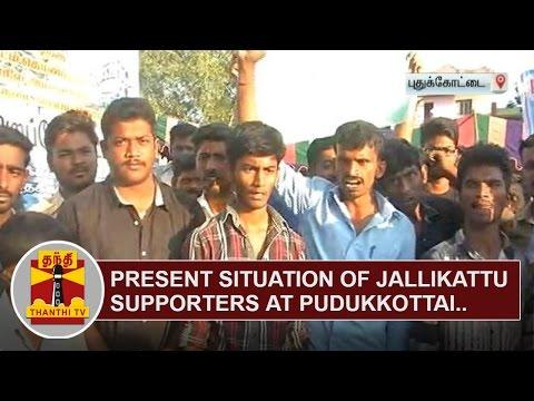 Present Situation of Jallikattu Supporters at Pudukkottai | Thanthi TV
