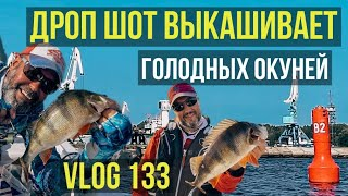 Вот это клев За шесть часов рыбалки ящик окуней Дроп шот лучшая снасть на окуня окунь