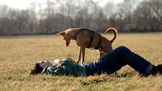 Dog Tricks by Podenco Novo