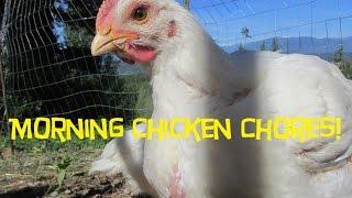 Raising Chickens Off Grid:  Homesteading Chicken Chores!