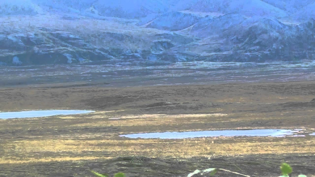 Haul road caribou hunting alaska youtube for Alaska out of state fishing license