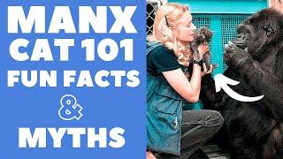 Manx Cats 101 : Fun Facts & Myths