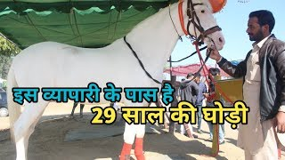 Muktsar Mela 2019 - मेले में आये इस व्यापारी के पास है 29 साल की घोड़ी(contact- 8427712003