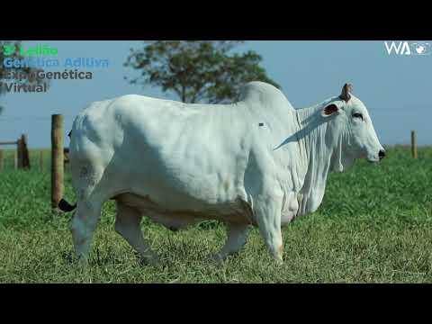 LOTE 1002 - REM EPPA - REM A151 - 3º Leilão Genética Aditiva Expogenética 2020